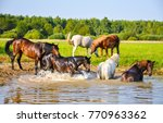 Stock photo horse herd are bathed 770963362