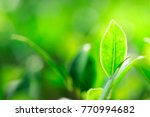closeup nature view of green... | Shutterstock . vector #770994682