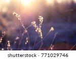 grass background light   Shutterstock . vector #771029746