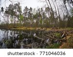 landscape with trees gnawed by...   Shutterstock . vector #771046036