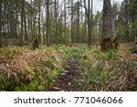 landscape with trees gnawed by...   Shutterstock . vector #771046066