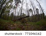 landscape with trees gnawed by...   Shutterstock . vector #771046162
