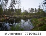 landscape with trees gnawed by...   Shutterstock . vector #771046186