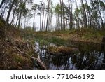 landscape with trees gnawed by...   Shutterstock . vector #771046192