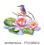 Kingfisher Bird And Pink Lotus...
