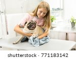 Stock photo happy pug sitting on examination table being dried by a professional vet using towel cheerful 771183142