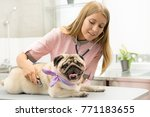 Stock photo young beautiful female vet examining a cute pug at the veterinarian clinic using stethoscope 771183655