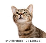 striped cat looks upwards with... | Shutterstock . vector #77125618