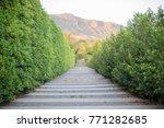 walkway in the park on mountain ... | Shutterstock . vector #771282685