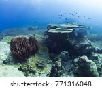 coral reef underwater with fishs | Shutterstock . vector #771316048