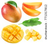 set of mango fruits  mango... | Shutterstock . vector #771317812