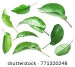 green apple leaves on the white ... | Shutterstock . vector #771320248