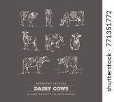 cow set   8 realistic cow line... | Shutterstock .eps vector #771351772