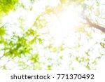 blur background of forest...   Shutterstock . vector #771370492