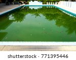the water in the pool is rotten. | Shutterstock . vector #771395446