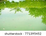 the water in the pool is rotten. | Shutterstock . vector #771395452
