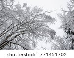 winter road and forest in the... | Shutterstock . vector #771451702