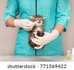 veterinary survey of cute