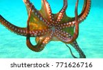 underwater photo of octopus in... | Shutterstock . vector #771626716