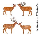 Collection Of Deer Isolated On...