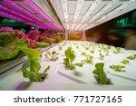 Organic hydroponic vegetable...