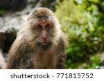 monkey in mount emei  china | Shutterstock . vector #771815752