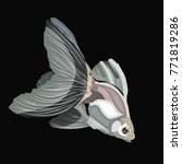 vector veiltail goldfish  black ... | Shutterstock .eps vector #771819286