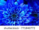 close up of blue flower aster...   Shutterstock . vector #771840772
