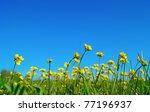 Bright Beautiful Yellow Flower...