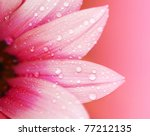 Pink Flower Petals  Macro On...