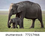 Stock photo wild asian elephant mother and baby corbett national park india 77217466