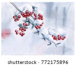 rowan branch under the snow.... | Shutterstock . vector #772175896