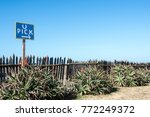 u pick sign and a rustic fence... | Shutterstock . vector #772249372