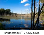 beaver lodge in the middle of... | Shutterstock . vector #772325236