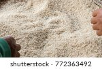 farmer hand and rice raw... | Shutterstock . vector #772363492