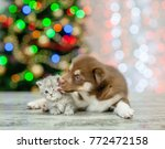 Stock photo husky puppy licking kitten on a background of the christmas tree 772472158