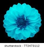 spring turquoise blue flower... | Shutterstock . vector #772473112