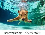 Underwater Funny Photo Of...