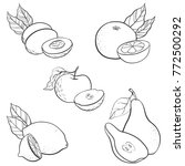 vector drawing fruits isolated...   Shutterstock .eps vector #772500292