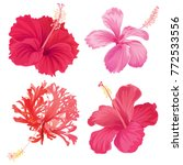 beautifu hibiscus syriacus... | Shutterstock .eps vector #772533556