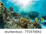 beautiful underwater coral reef ... | Shutterstock . vector #772570042