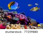 underwater world. coral fishes... | Shutterstock . vector #77259880
