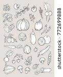 hand drawn isolated vegetable... | Shutterstock .eps vector #772699888