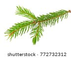 fir tree branch isolated on... | Shutterstock . vector #772732312