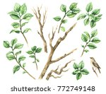 watercolor painting.  hand... | Shutterstock . vector #772749148