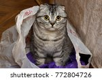 cat in the package at home.... | Shutterstock . vector #772804726