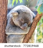 in  australia  the typical free ... | Shutterstock . vector #772819468