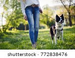 Stock photo beautiful woman walking cute dog in nature 772838476