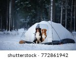 two dogs in a tent on snow in... | Shutterstock . vector #772861942