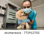 female veterinarian is hugging...   Shutterstock . vector #772912702